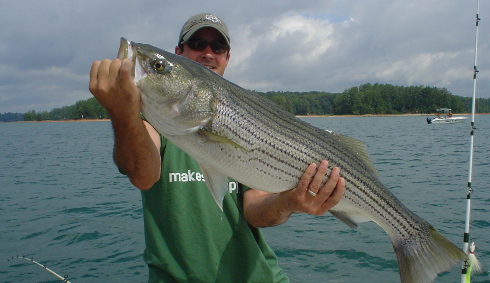 Good Spring Lanier Striper
