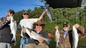 5 Lake Lanier Stripers at Once