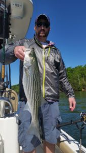 Good Lake Lanier Striped Bass