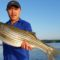 Good April Striper on Lake Lanier