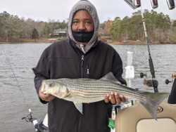 Lake Lanier Striper